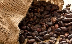 Investire sul cacao on line